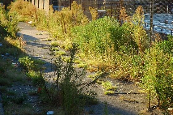 fredhatt-2004-sidewalk-reclaimed