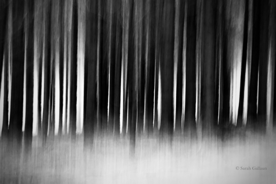 these_woods_breathe_evil_by_sarah__g-d5nwc3p