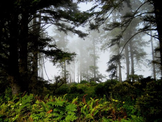 foggy_fern_forest_ll