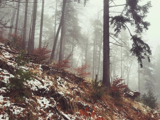 foggy_woods_by_noirerora-d9rzoga